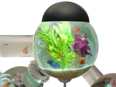 Une envie d 39 aquarium blog esprit design for Achat aquarium rond