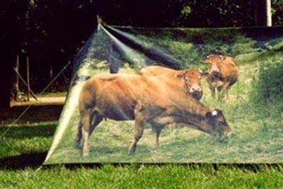 Oh la Vache par Herve Matejewski