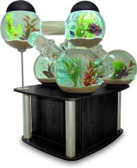 Une envie d'aquarium ?
