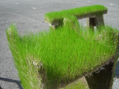 Laisser entrer la Nature par Kevin Hunt, blog-espritdesign.com