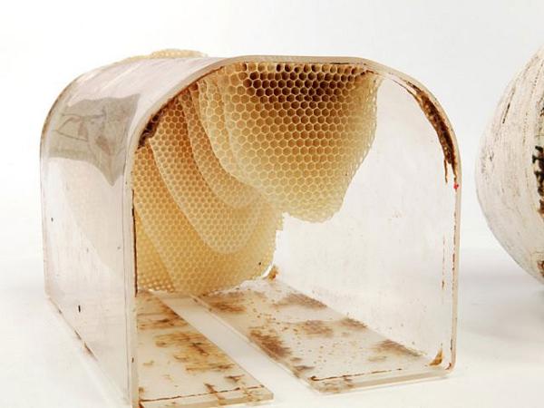 To Bee Design et Ruche par Levi Bar