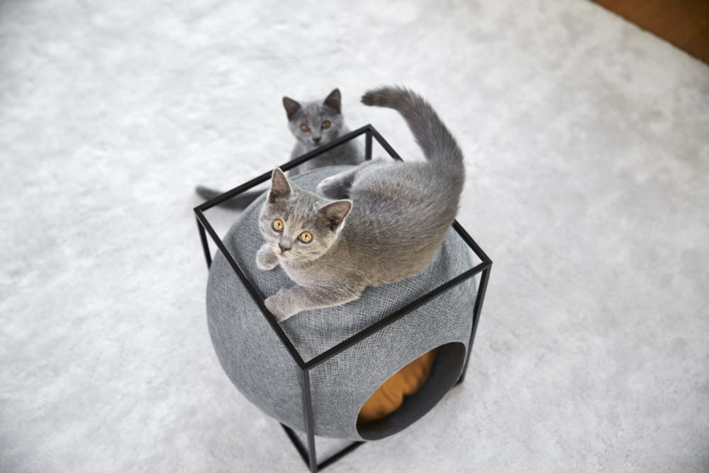 Crowdfunding mobilier chat meyou paris - Lit pour chat design ...