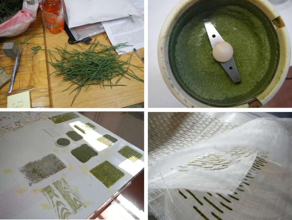 Katharina Jebsen, premières étapes du processus transformation des aiguilles de pin © Katarina Jebsen