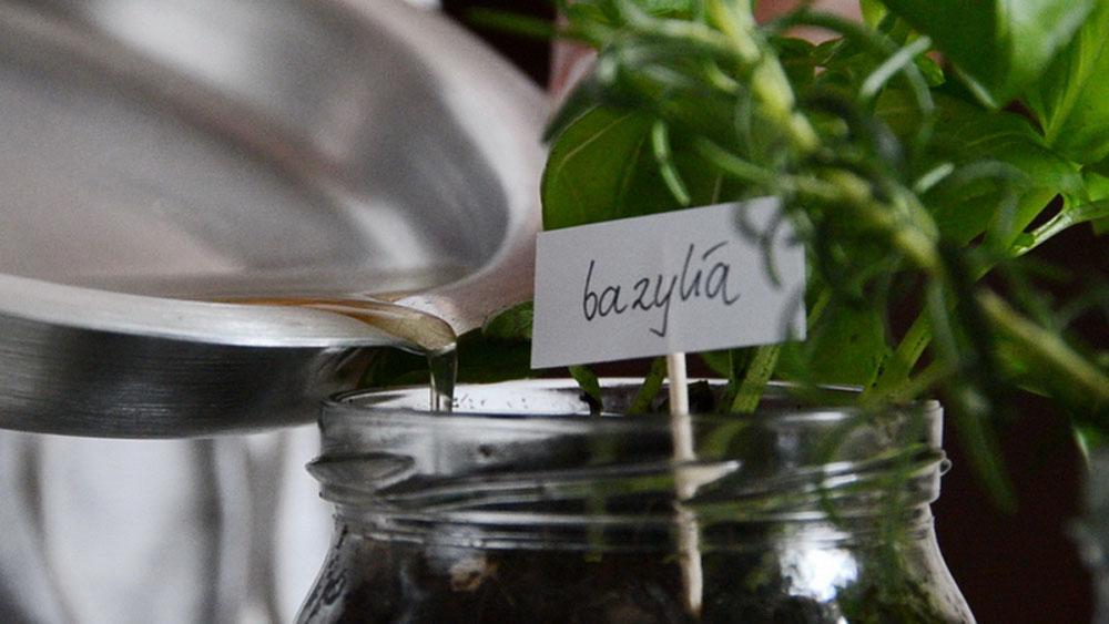 Tentez le compost dans votre cuisine avec Bono