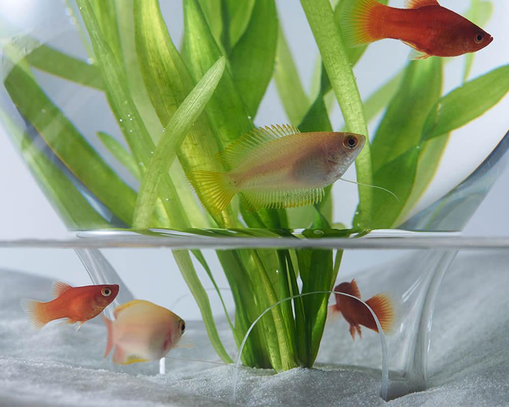 L'aquarium Waterscape de Haruka Misawa