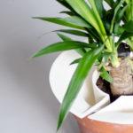 Slo, l'accessoire botanique de David Touzain