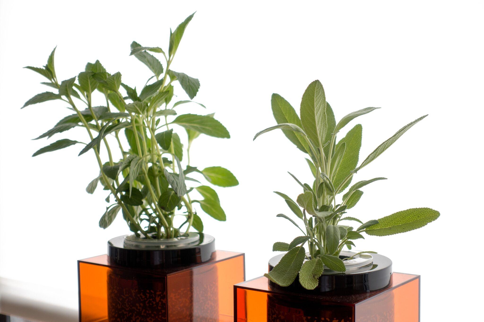 Spacepot, un pot hydroponique digne de la NASA dans votre cuisine, par FutureFarmsSpacepot, un pot hydroponique digne de la NASA dans votre cuisine, par FutureFarms